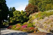 Rock & Alpine Garden
